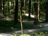 poligon-v-gozdu